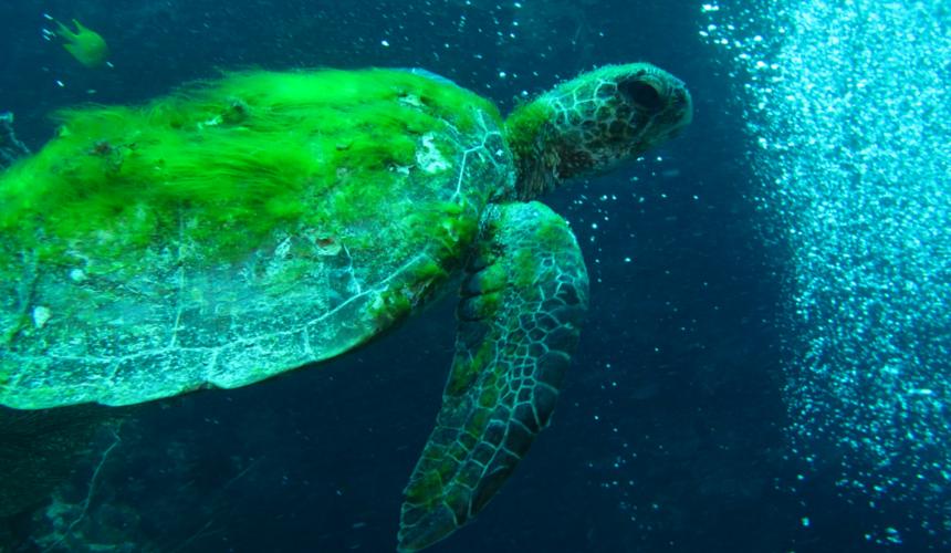 Endangered Animals Marine Turtles