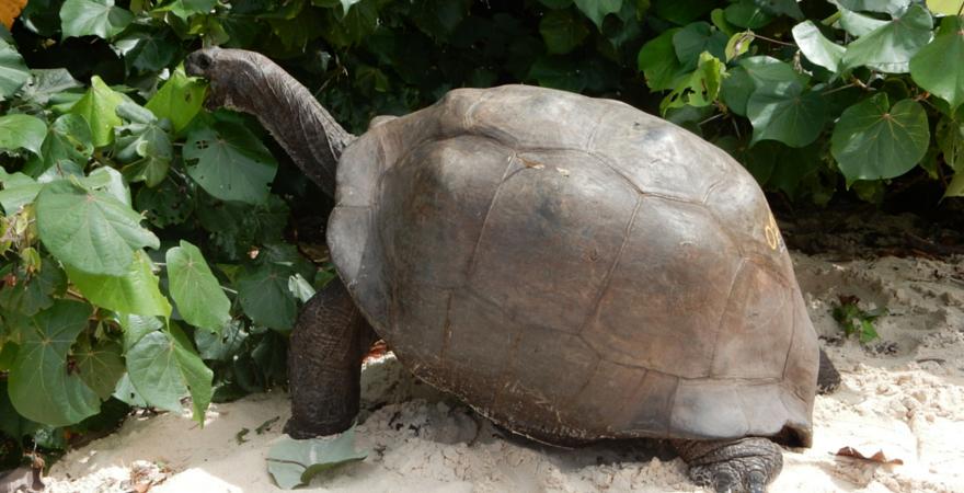 Top 5 Reasons To Volunteer In Seychelles