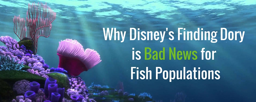 Why Disney's Finding Dory is Bad News for Fish Populations