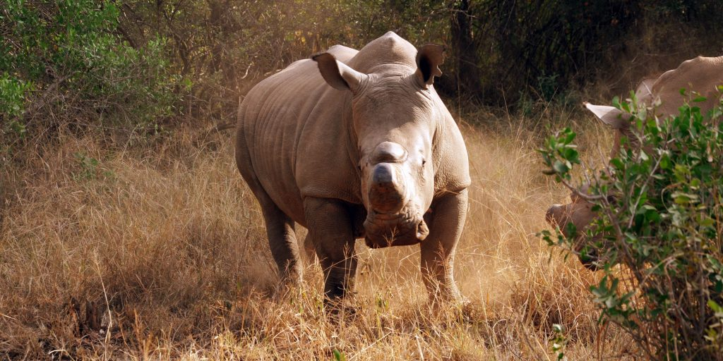 Fascinating Facts About Africa's Endangered Animals