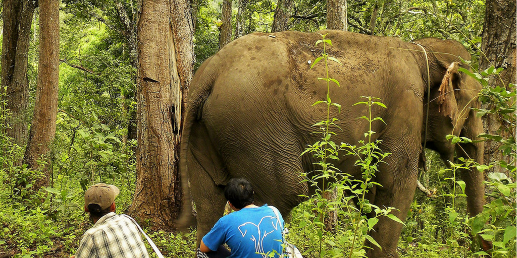 Work At A Thai Elephant Sanctuary