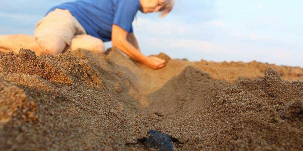Help Baby Sea Turtles Make It To The Ocean In Greece