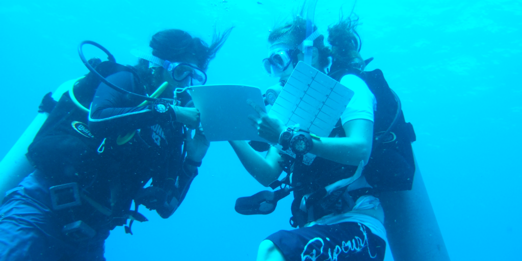 marine conservation internships can lead to many green careers