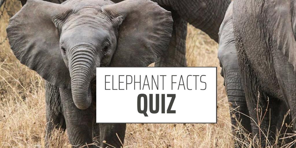 elephant facts quiz