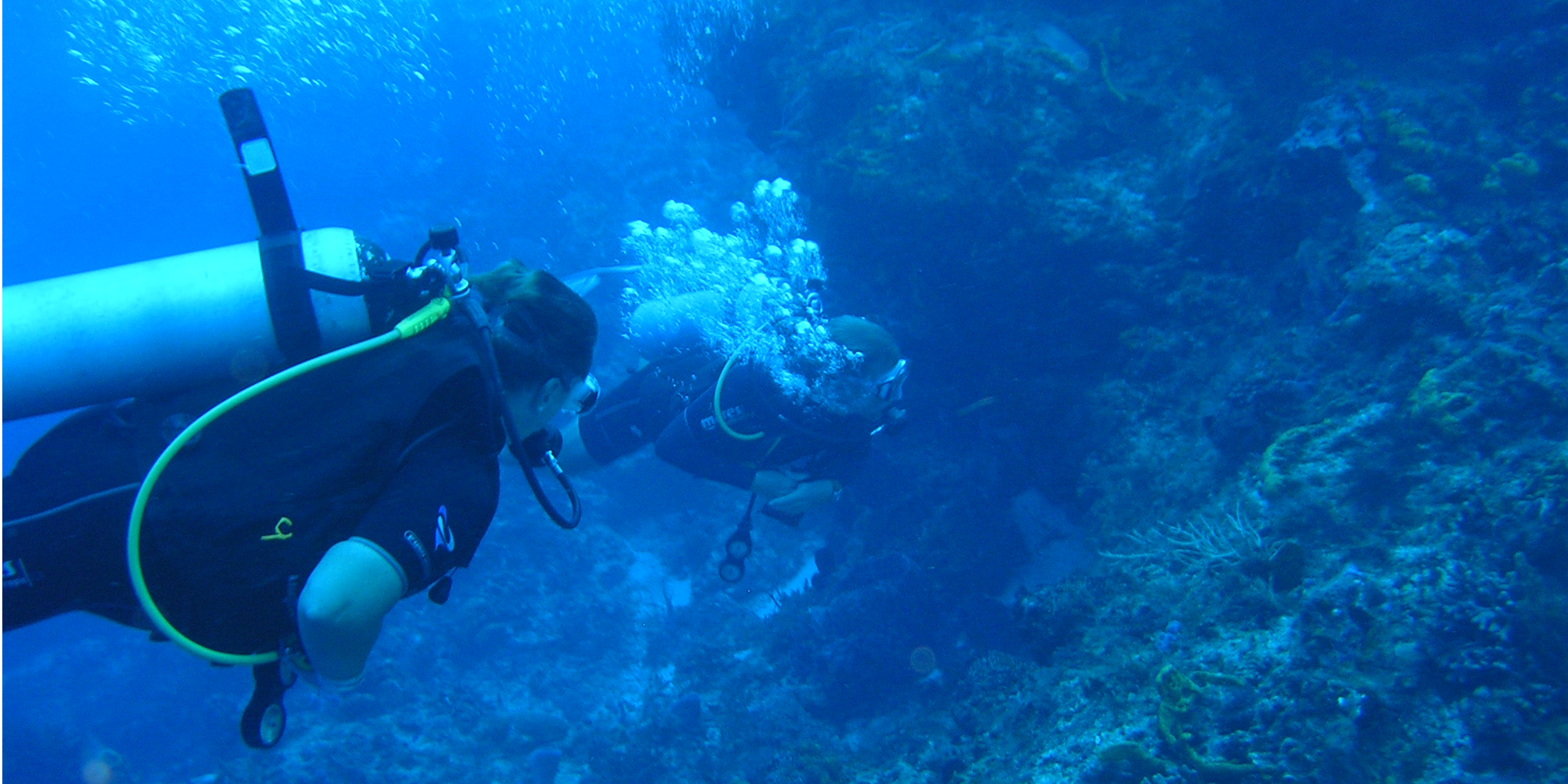 GVI participants collect marine conservation data off of the coast of Mexico. Data is used to support local authorities in policy to save the oceans.