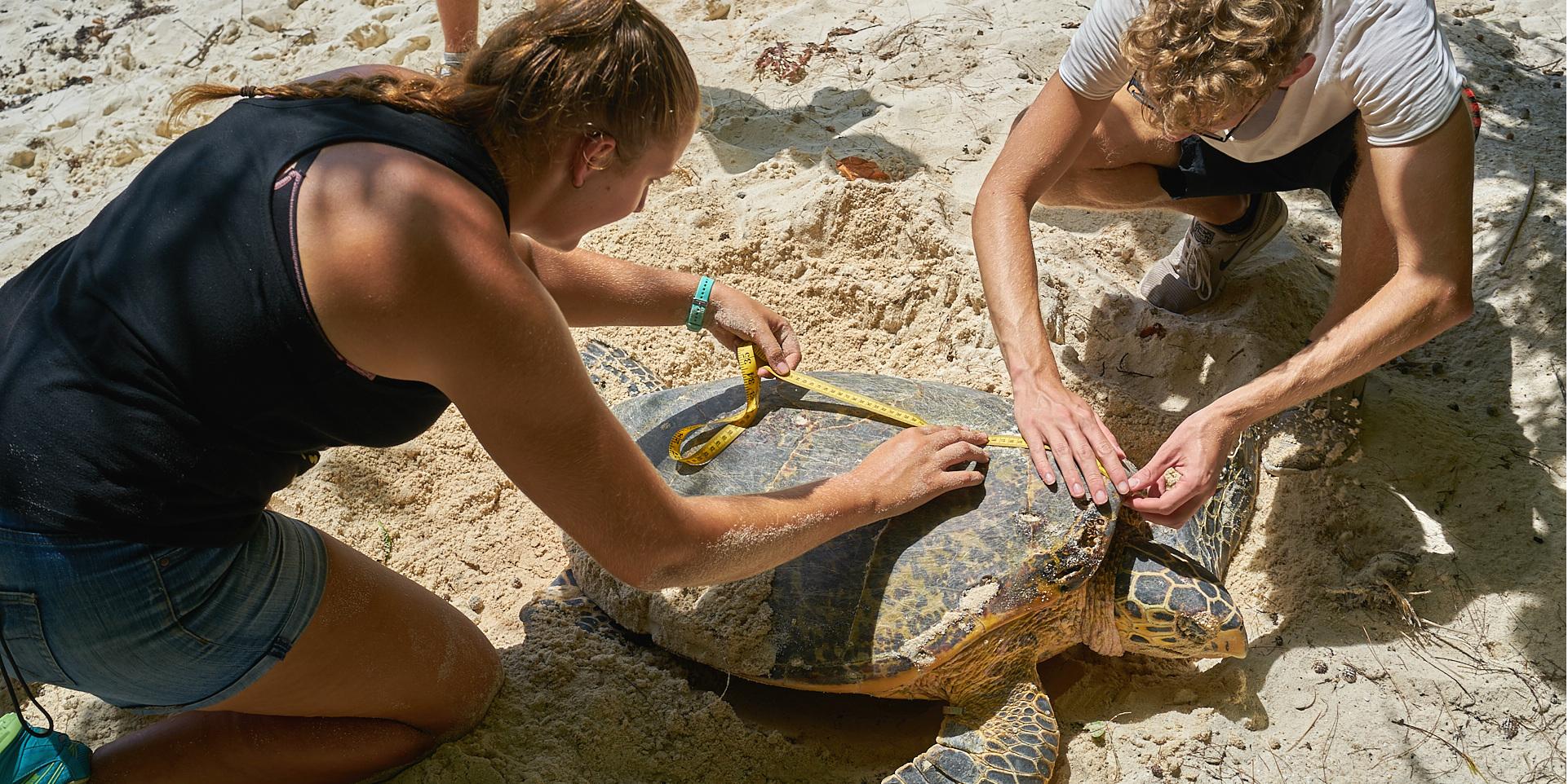 volunteer holidays with animals
