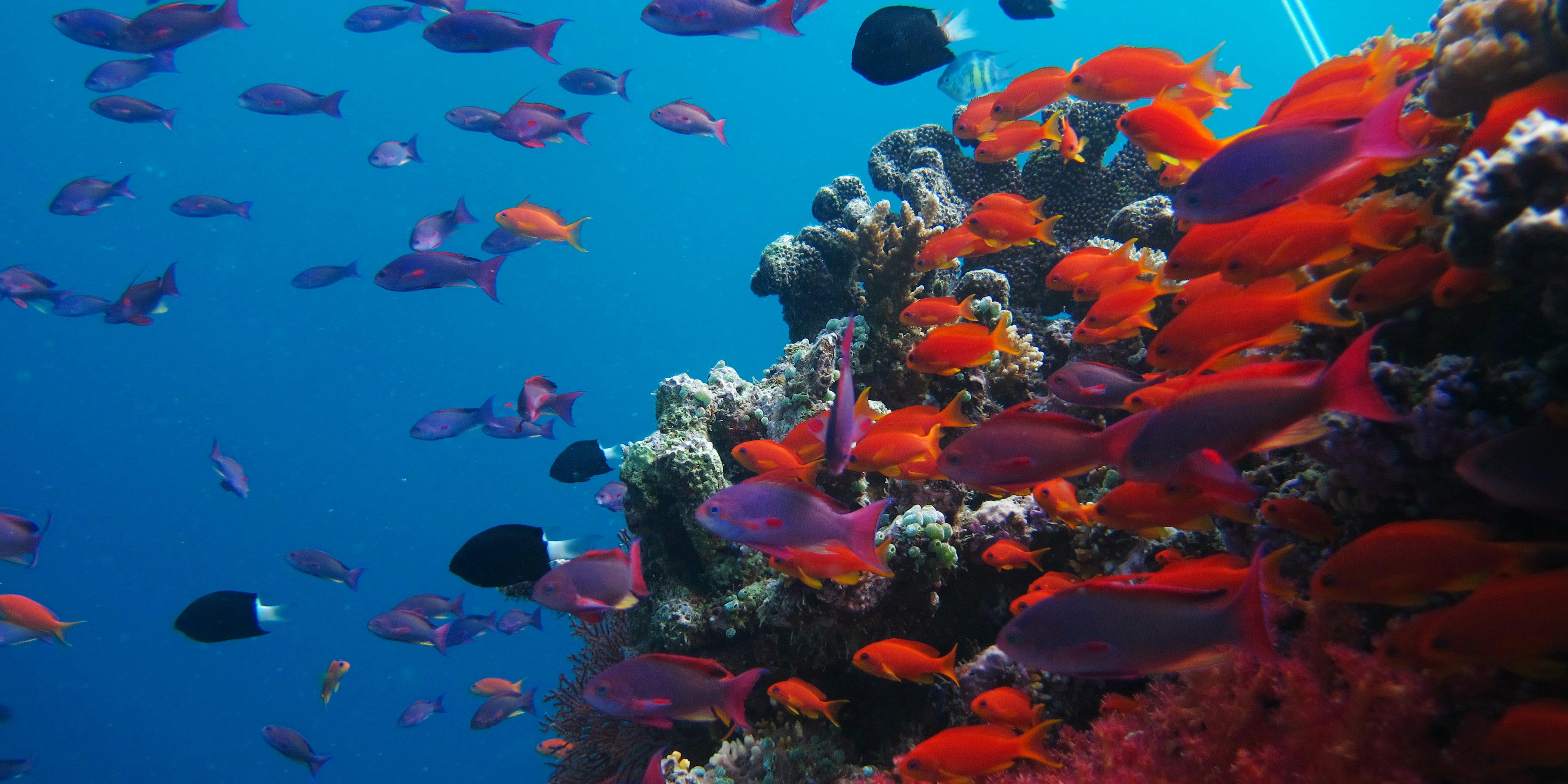 Marine biodiversity
