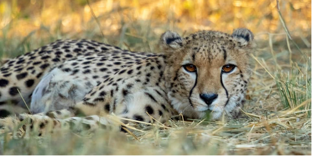 Wildlife conservation volunteering South Africa