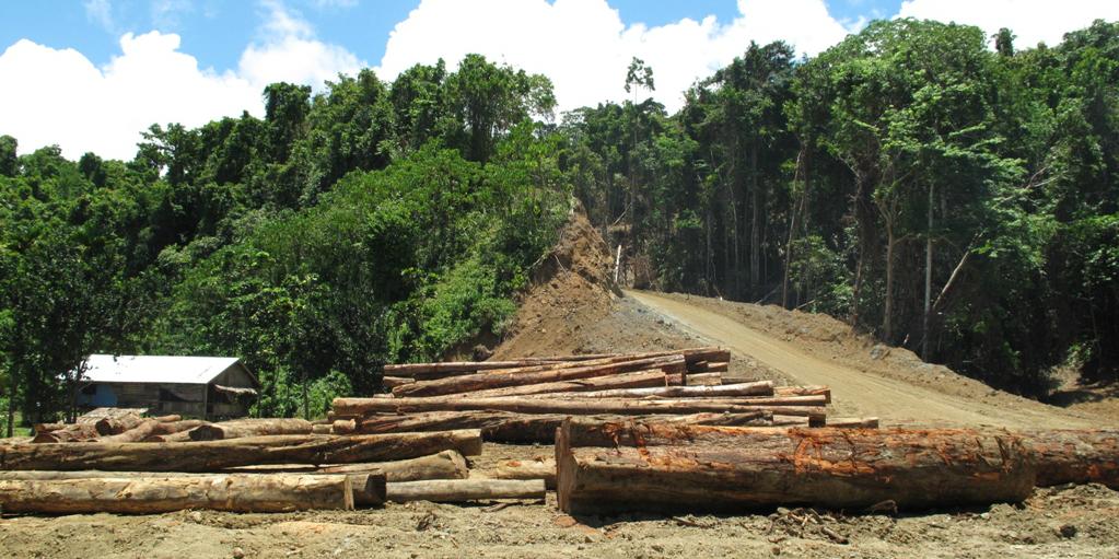 effects of deforestation