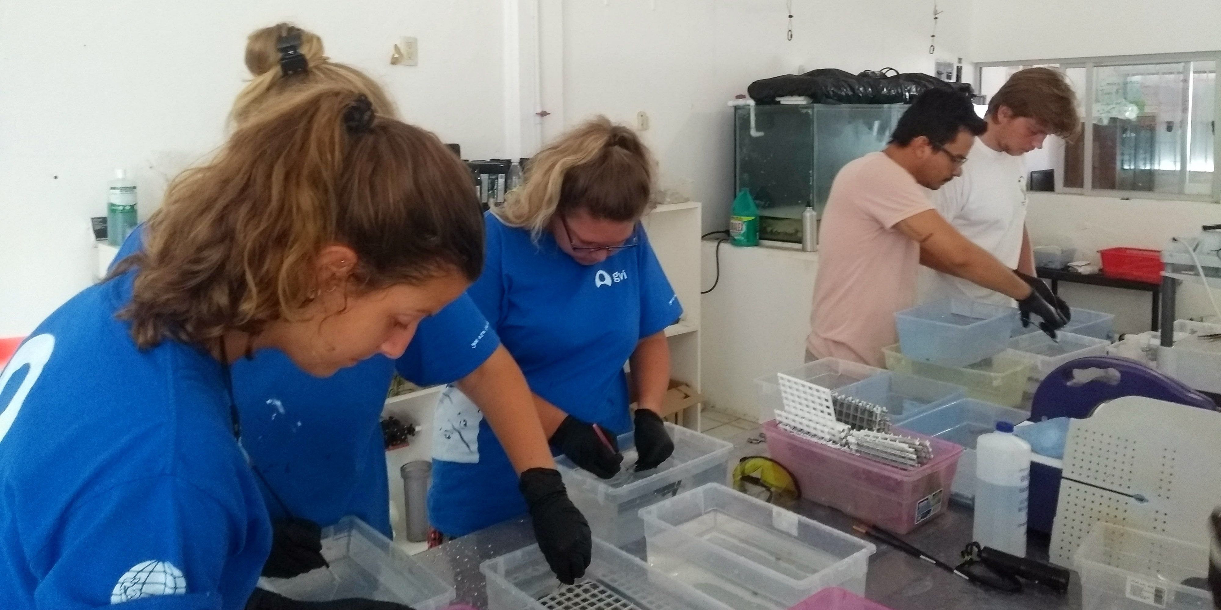 GVI participants work on growing coral polyps in Puerto Morelos, Mexico, as part of efforts to conserve the coral reef.