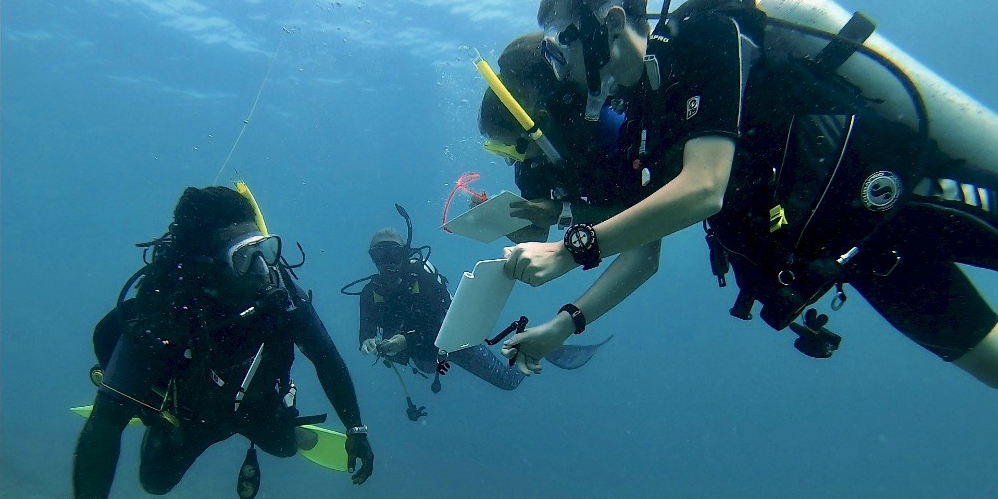 GVI participants complete vital marine conservation research in Mahe, as part of their gap semester.