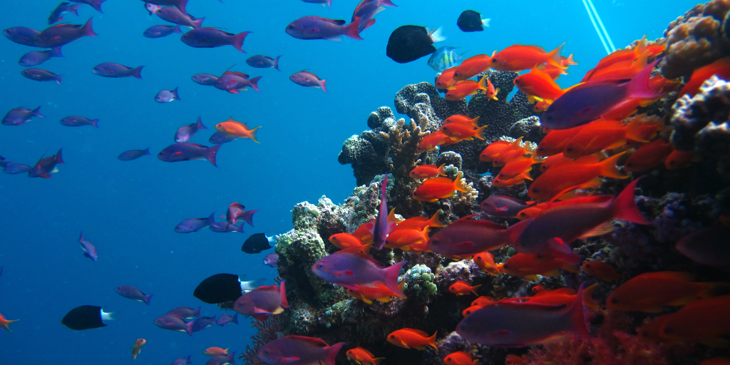 Conserving coral reefs like this is one of many activities you can take part in on a gap year travel program.