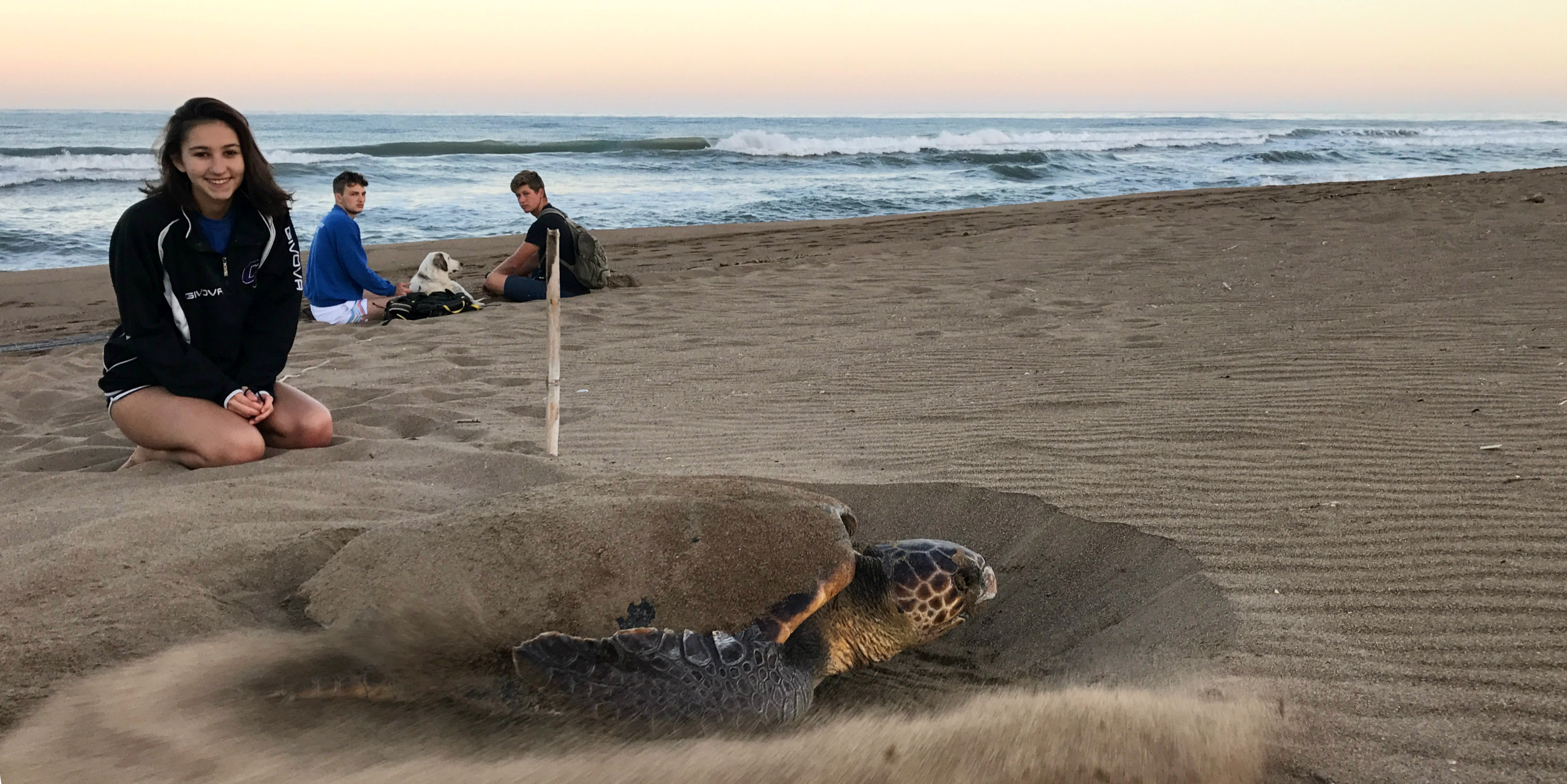 A participant takes part in one of GVI's gap year opportunities, by helping to monitor the nesting activity of endangered loggerhead turtles in Greece.