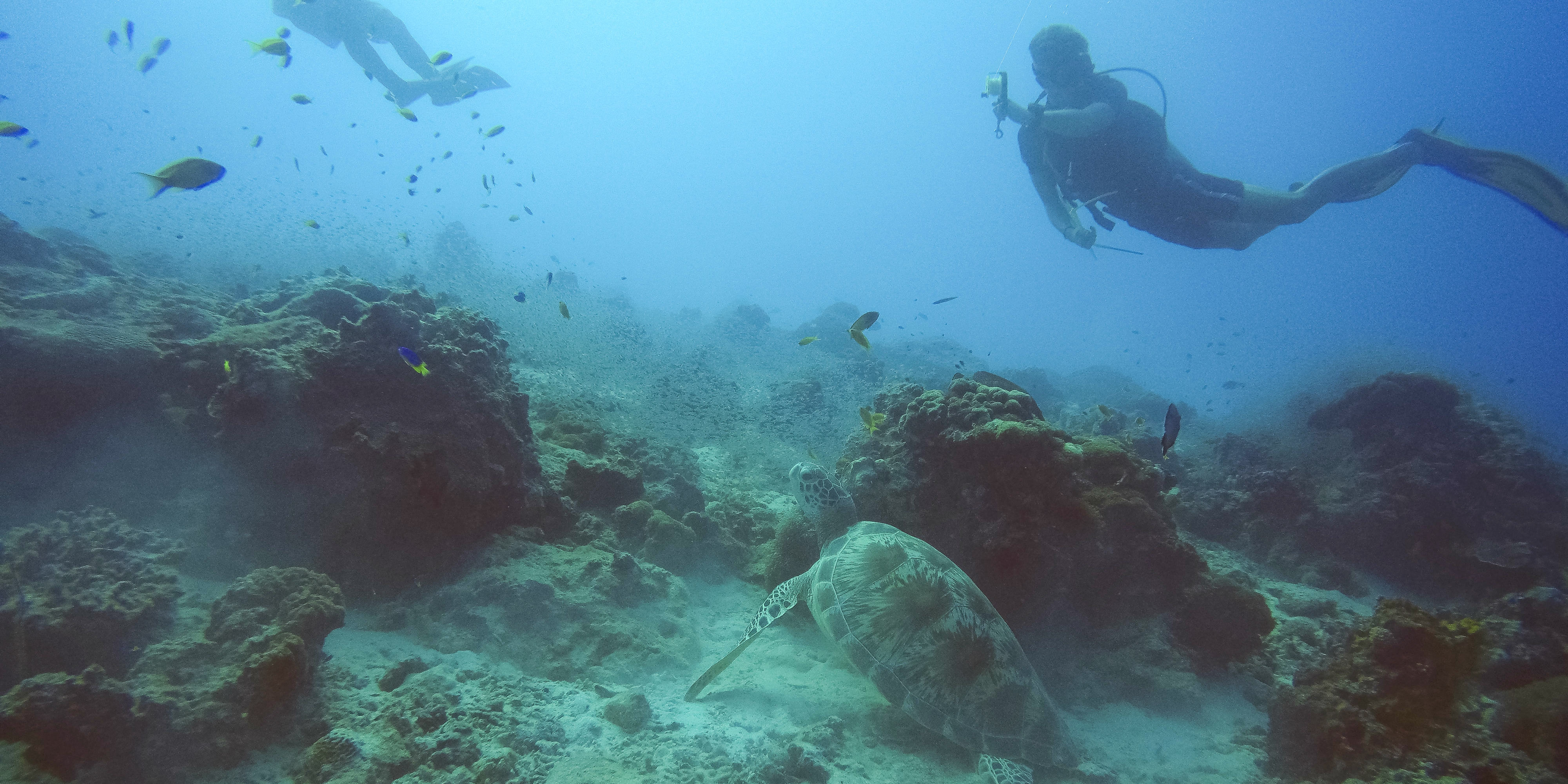 GVI participants explore the coral reefs surrounding Mahe while on a gap year.