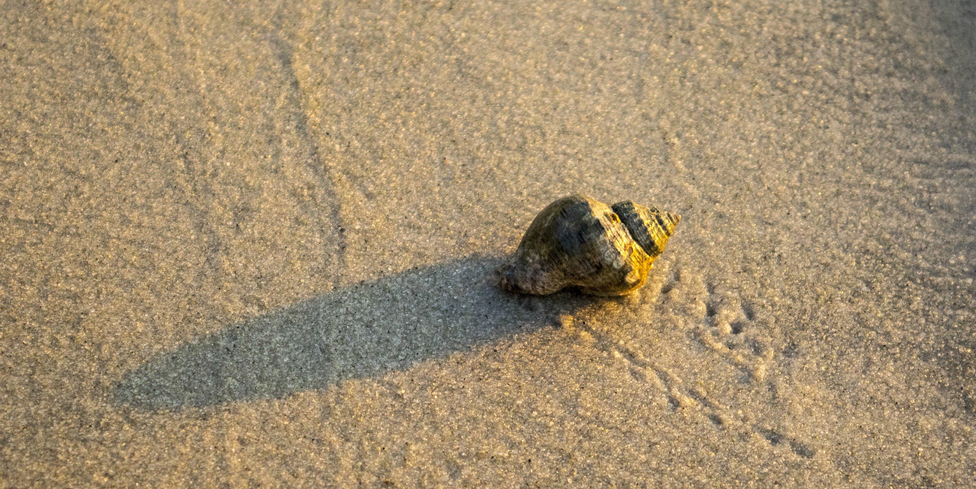 A hermit crab crawls across a beach   responsible travel