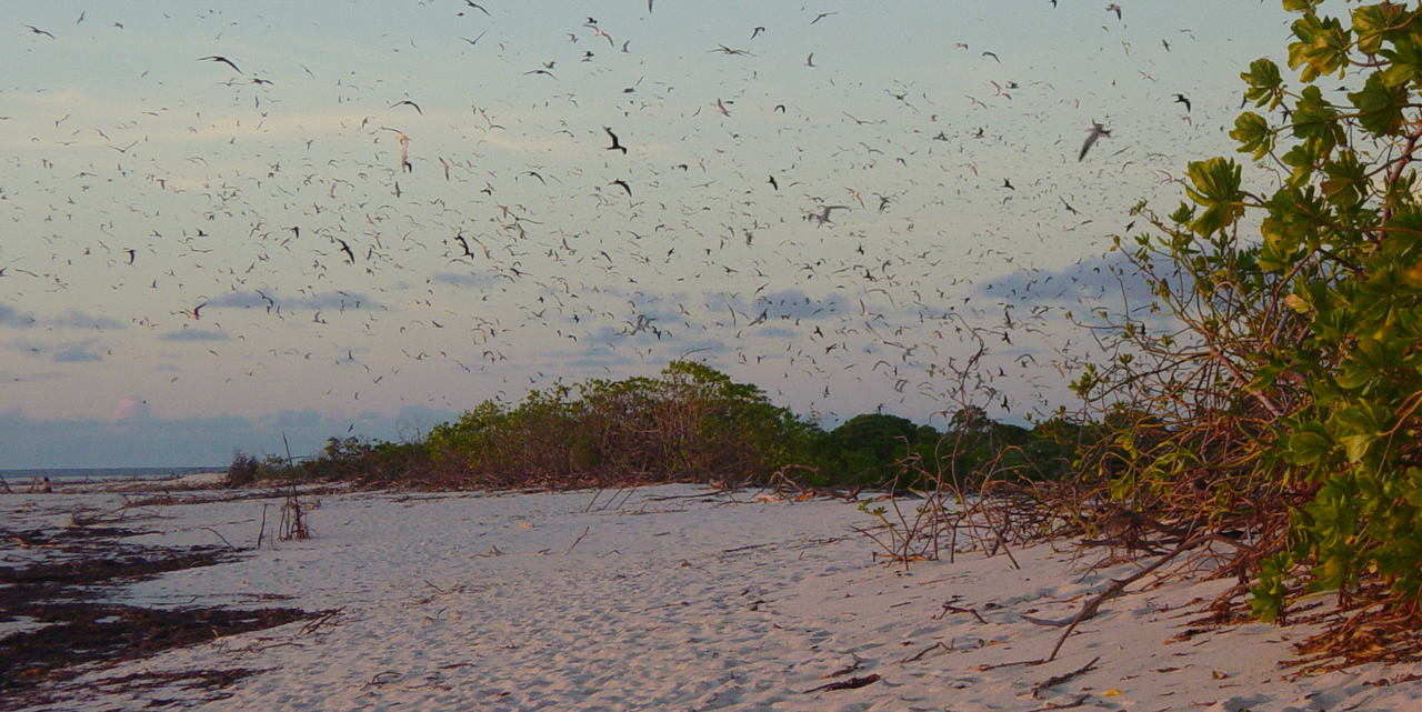 A flock of birds pepper the skies of Bird Island, in the Seychelles archipelago -- home to bird and turtle conservation projects.