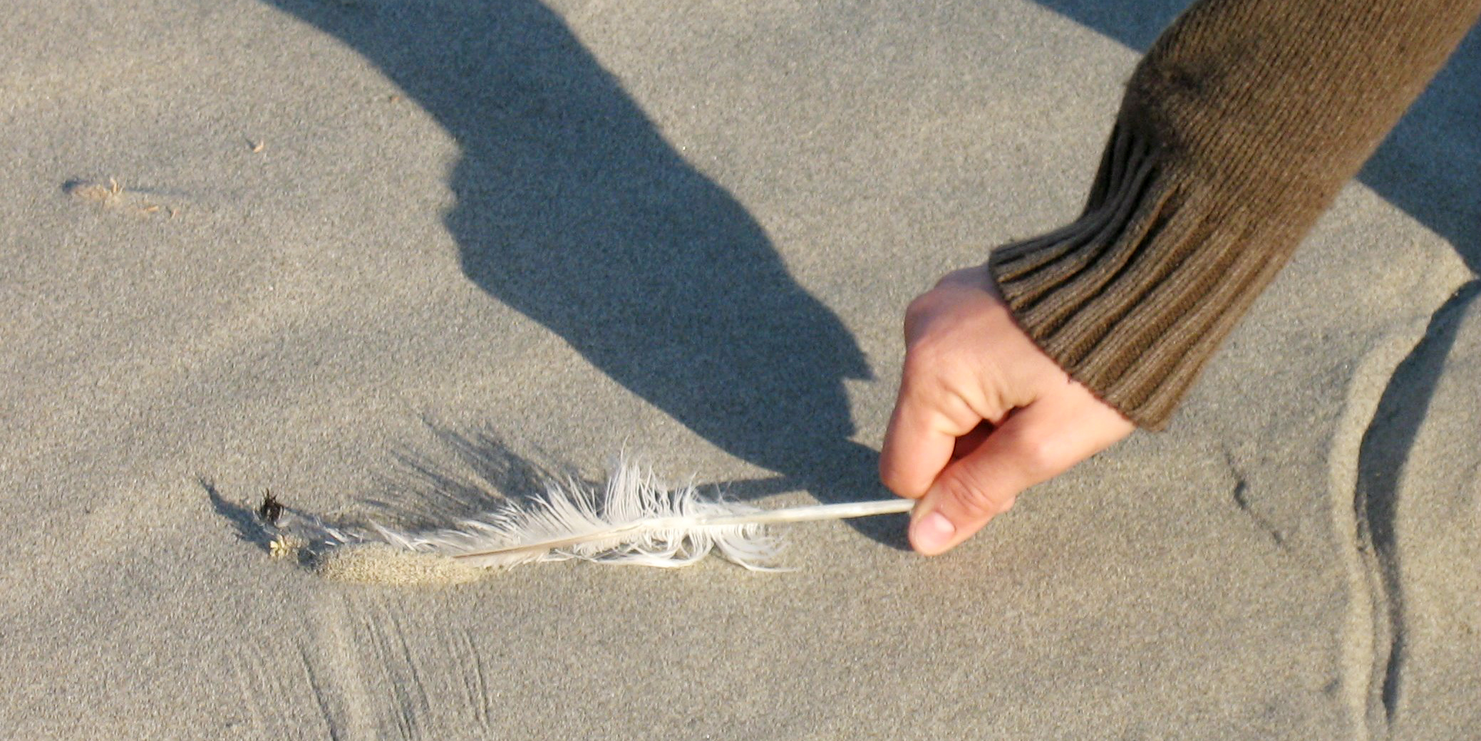 An individual bends down to collect a feather off of a beach   sustainable travel tips
