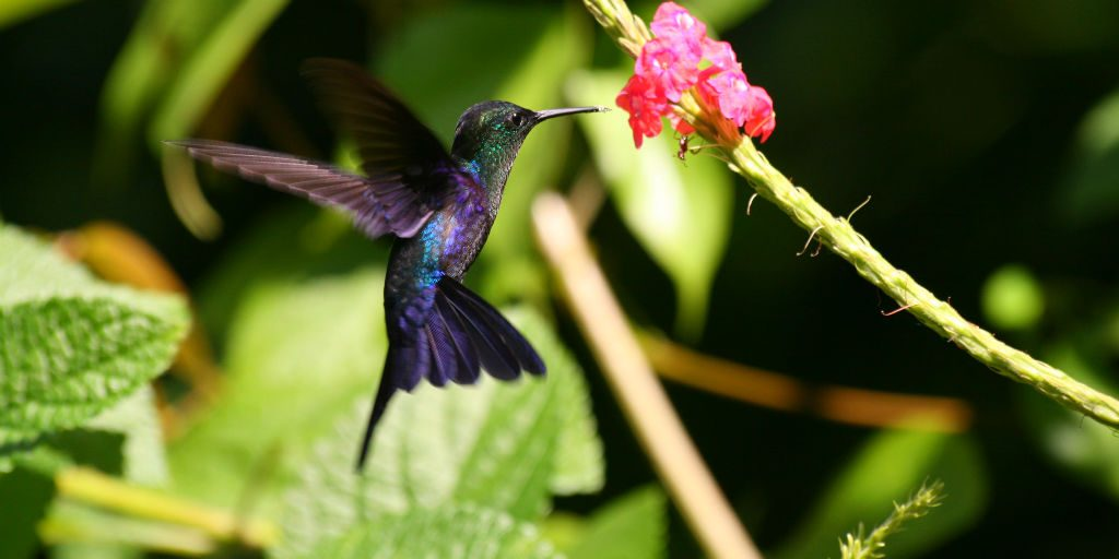 Tortuguero in Costa Rica is home to many bird species including this hummingbird.