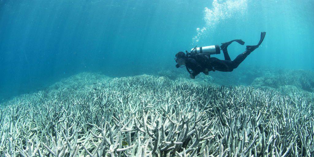 A GVI volunteer witnesses coral bleaching
