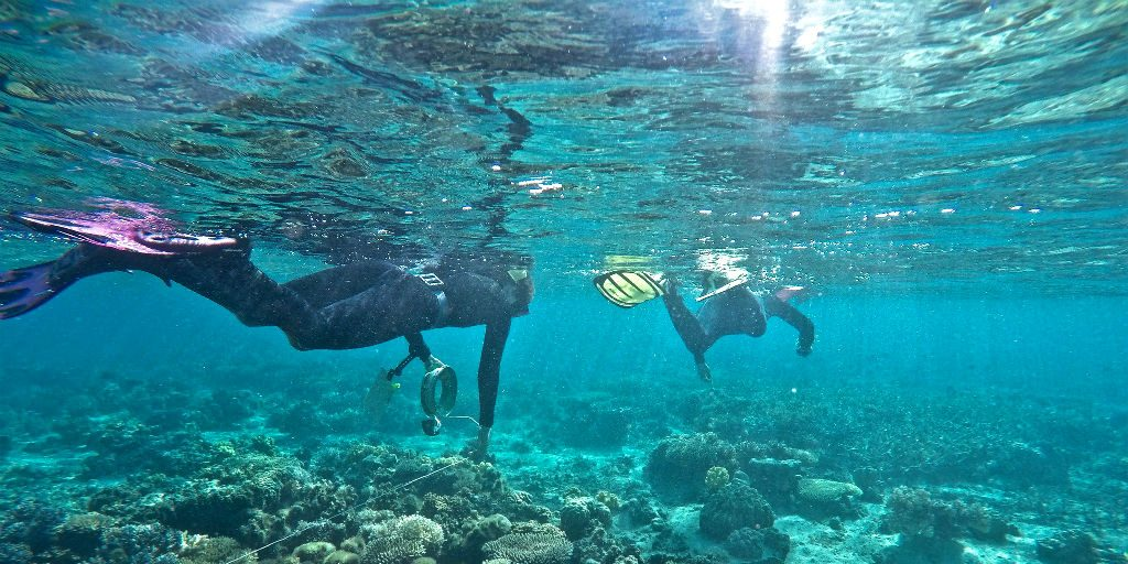 Marine conservation internships can equip you with the skills to turn your passion into a career.
