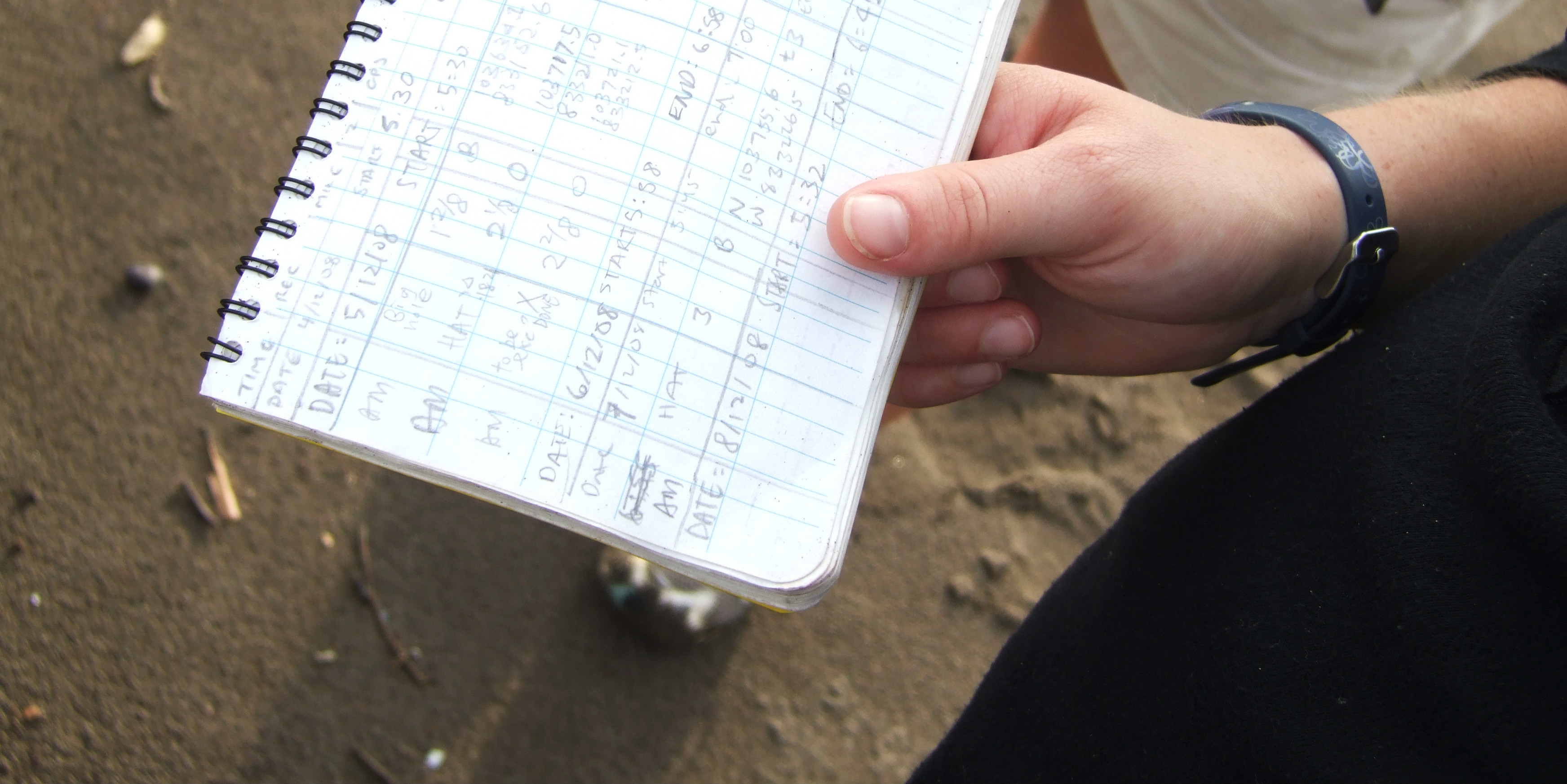 A GVI participant captures sea turtle conservation data.