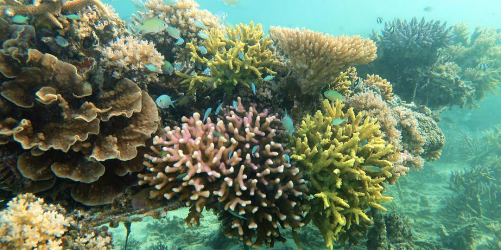 Help preserve coral reefs on a gvi marine conservation program