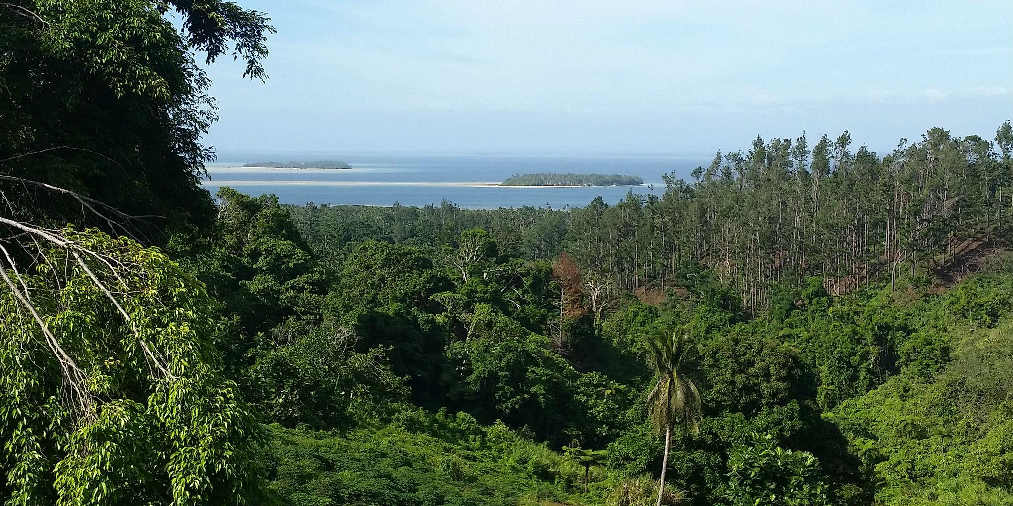 Explore Colo-I-Suva Forest Park when travelling in Fiji