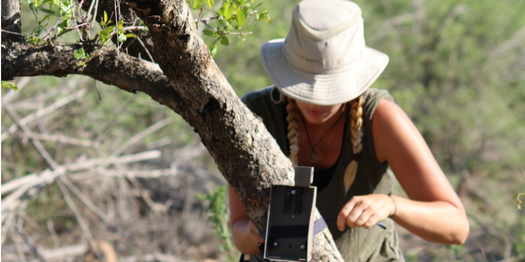 Wildlife conservation volunteer securing wildlife monitoring equipment to a tree in the field