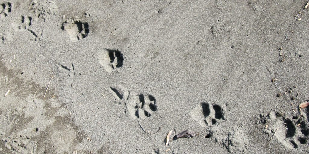 With eco-travel, the only footprints left behind should be those in the sand.