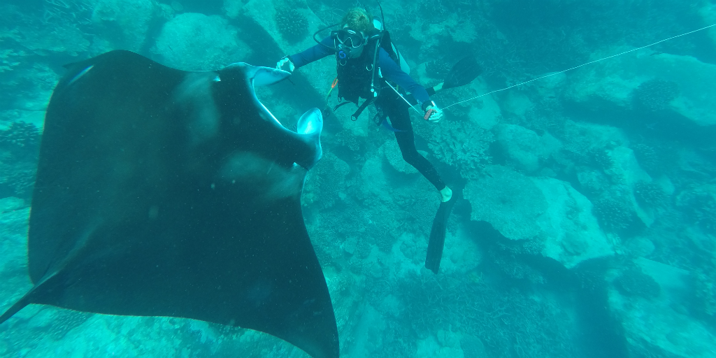 One of GVIs volunteer scuba divers with a sting ray