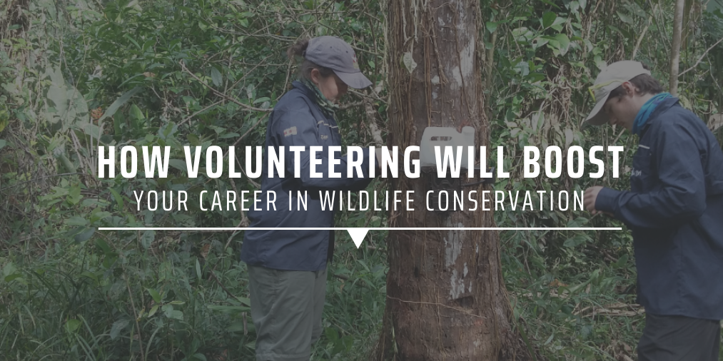 How volunteering will boost your career in wildlife conservation