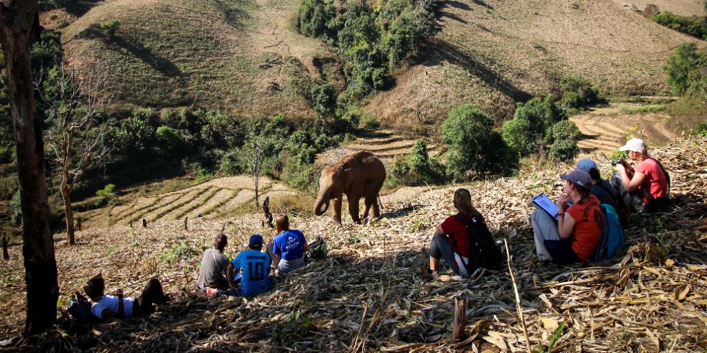 Rejuvenate your mind and body on a wildlife conservation volunteer program.