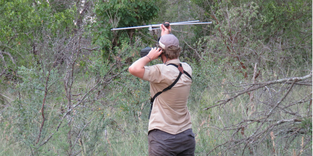 A volunteer holding up an antennae in a clearing surrounded by bushes.