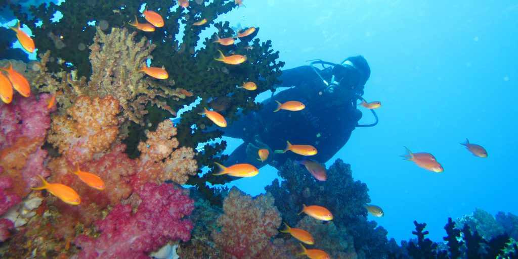 Watch footage of coral reefs while doing a marine conservation virtual internship.