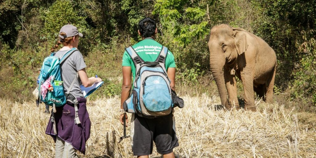 Service-learning includes wildlife conservation.