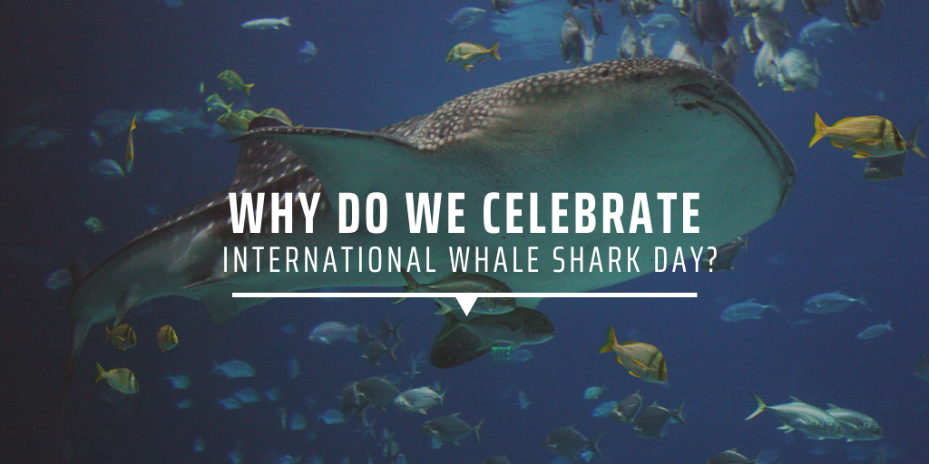 Why do we celebrate International Whale Shark Day