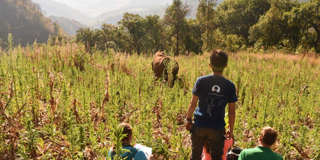 Volunteers on a wildlife conservation program in Thailand