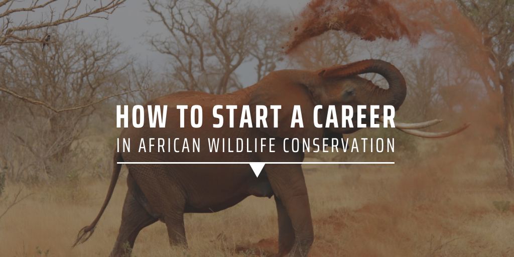 How to start a career in African wildlife conservation