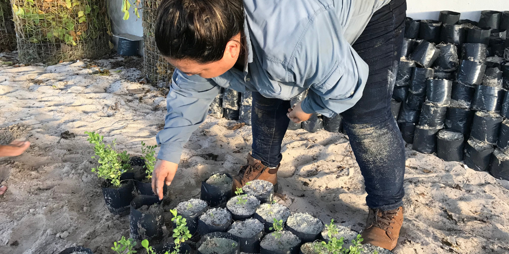 A volunteer planting spekbooms